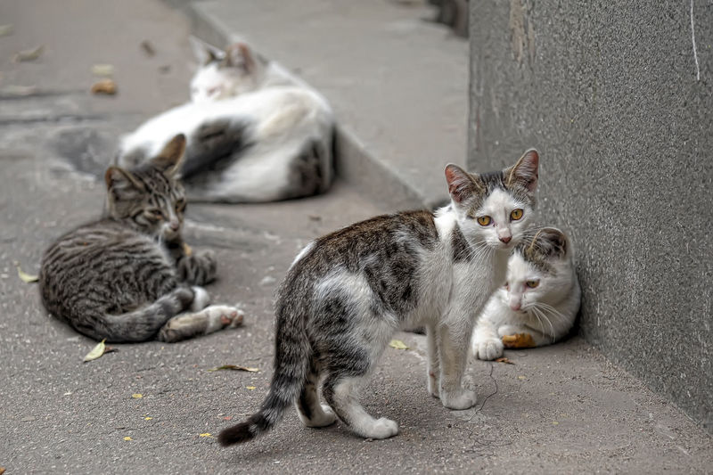 Cats relaxing on street