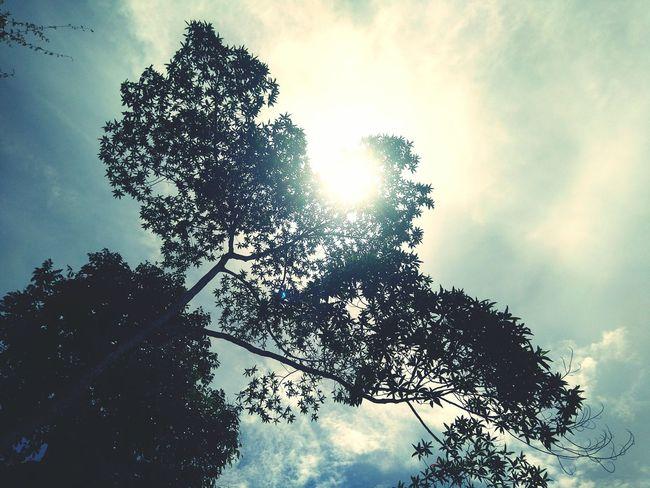 Showcase: November Nature Nature_collection Nature Photography Nature_perfection Tree_collection  Trees Sun_collection Sunbright Eye4photography  EyeEm Best Pics EyeEm Best Shots Eyeemphotography EyeEm Gallery EyeEm Indonesia EyeEmIndonesiaKu EyeEmIndonesiaCommunity Oppo Smartphone OppoR1x Travelensa