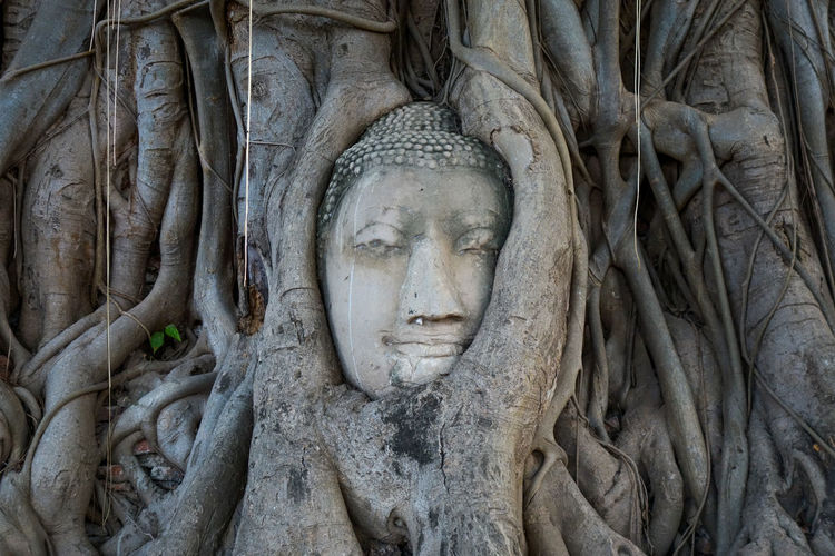 Ayutthaya Buddha Head statue with trapped in Bodhi Tree roots at Wat Maha That (Ayutthaya). Ayutthaya historical park Thailand. Ancient Ayutthaya Ayutthaya | Thailand Buddha Tree UNESCO World Heritage Site Ancient Ancient Civilization Art And Craft Buddha Head Craft Face Heritage History Human Representation Religion Sculpture Spirituality Statue