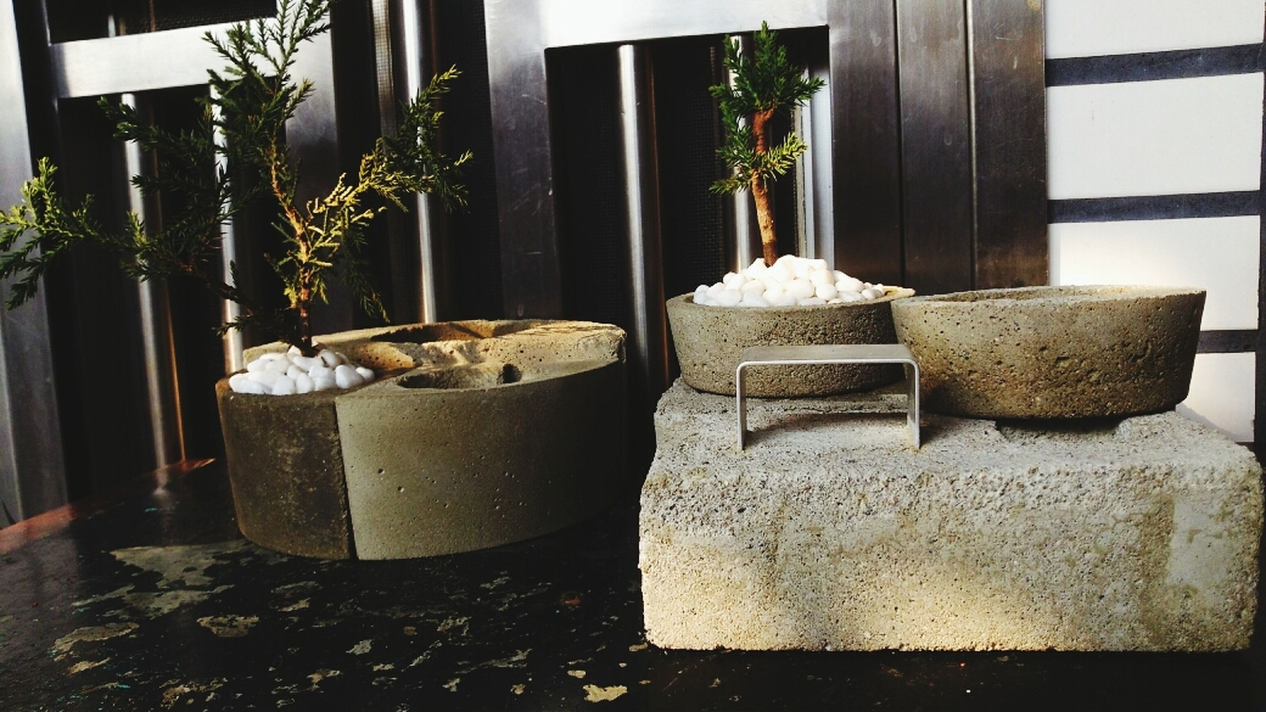 potted plant, plant, built structure, growth, architecture, house, indoors, window, wall - building feature, front or back yard, day, no people, chair, wood - material, building exterior, flower pot, sunlight, old, wall