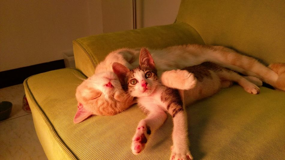 Catoftheday 喵星人 喵 Cute Animal Themes Kitten 貓咪睡覺 貓 毛小孩 Gato Meow Neko Domestic Cat Domestic Animals Cat 貓咪的日常 Love
