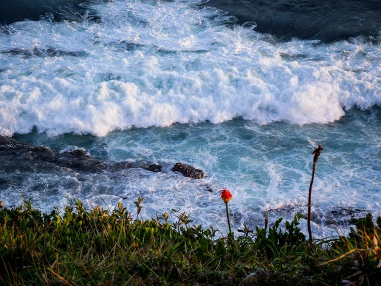 Stunning view near Morgan Bay, South Africa. EyeEmNewHere Sea Ocean Foam Waves Flower Red Blue Grass Scenics Wave Day Sea Outdoors Beauty In Nature Nature Water EyeEmNewHere