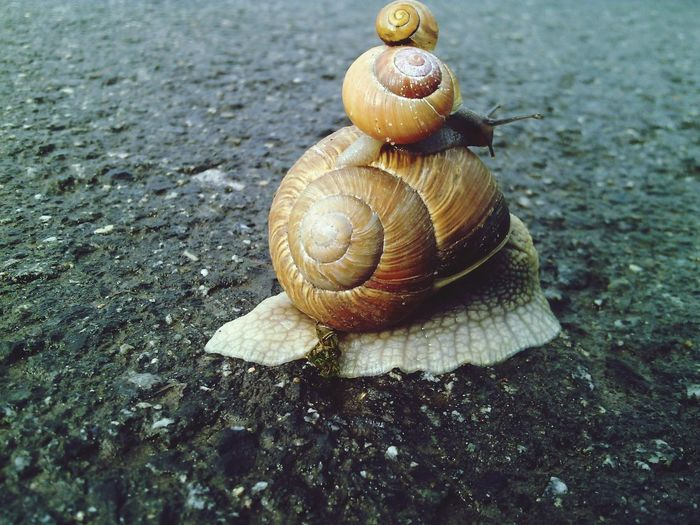 Bremer Stadtmusikanten mal anders ;) Taking Photos Relaxing Hanging Out Enjoying Life Hello World Draußen Im Grünen Check This Out Snail🐌