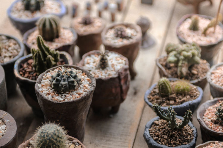 Photo of many cactus .... Cactus Cactus Garden Cactuslover Choice Close-up Day EyeEm Best Shots For Sale Freshness Growth Indoors  Large Group Of Objects Macro Macro Photography Macro_collection Market Nature Nature Nature_collection No People Plant Pot Potted Plant Retail  Variation