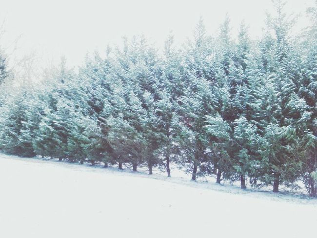 Snow Winterwonderland Winter Landscape_Collection