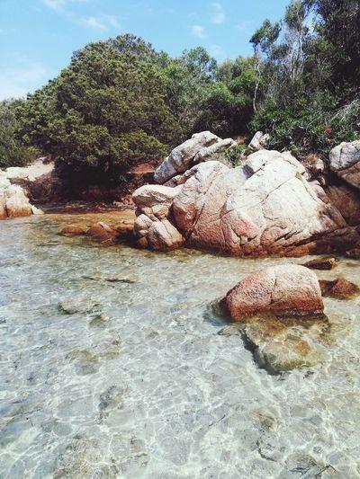 Tree Sand Beach