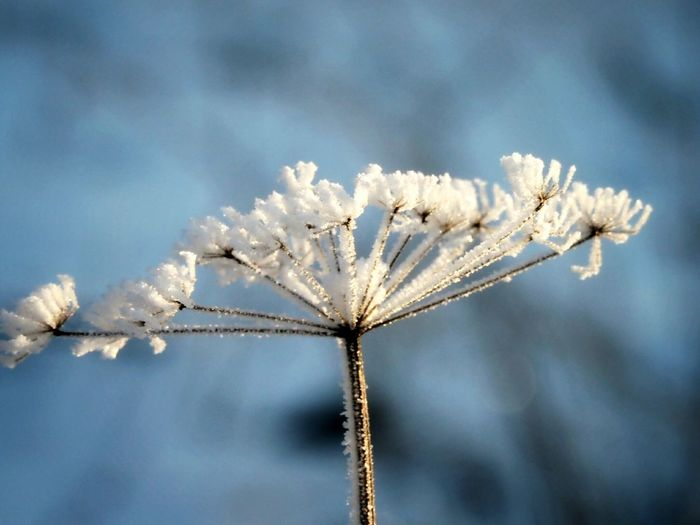 Naturephotography Nature Beauty Iced Frozen Nature Winter Nature Day Cold Weather Beautiful Nature Frozen Plant Winter Nature Weather Fragility Beauty In Nature Cold Temperature Snow No People Day Sky Close-up Snowflake Freshness