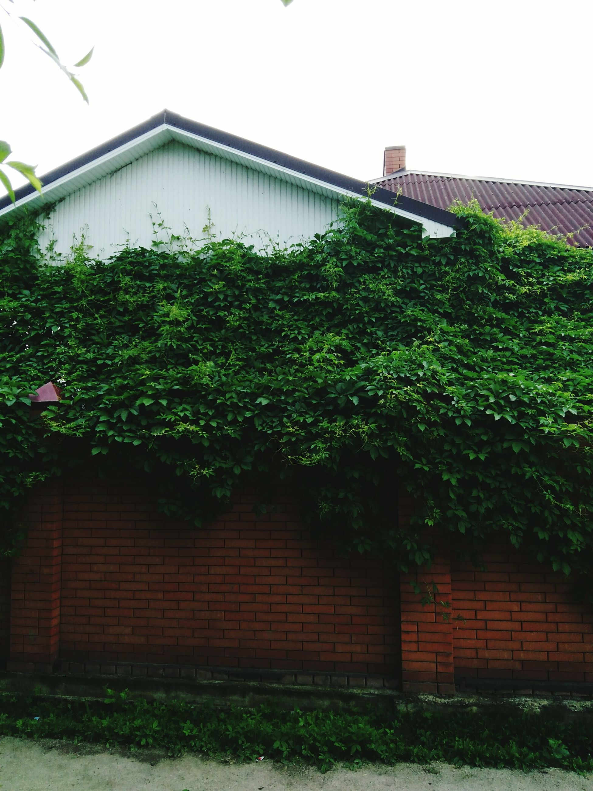 architecture, built structure, building exterior, clear sky, plant, brick wall, growth, house, green color, tree, wall - building feature, low angle view, window, stone wall, day, outdoors, ivy, residential structure, no people, wall