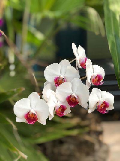 Ochids Flower