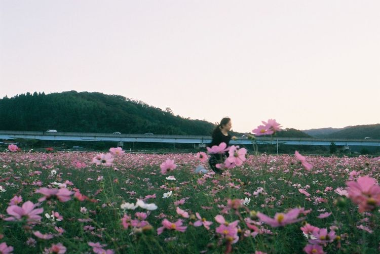 Woman with pink flowers on field against clear sky