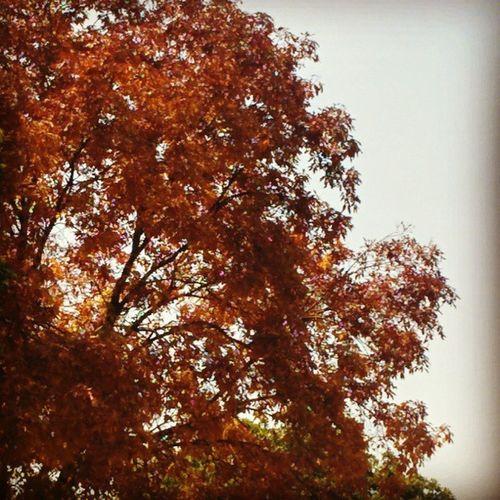 Autum Season Beauty of old