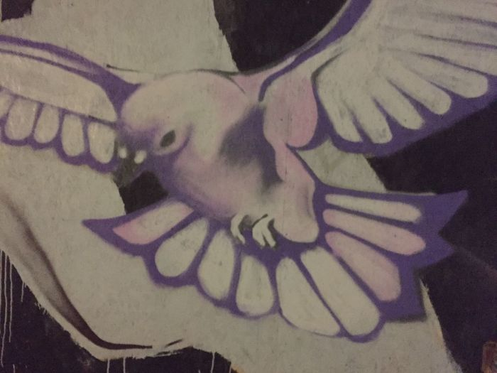 Street Art Graffiti Urban Icelandic Bird Graphic Pastel Pastel Power Dove Wall Art Painting Spray Paint Urban Beauty City Streets  Art In The City Beauty In The Everyday