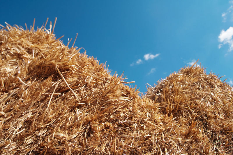 Pile of straw against sky