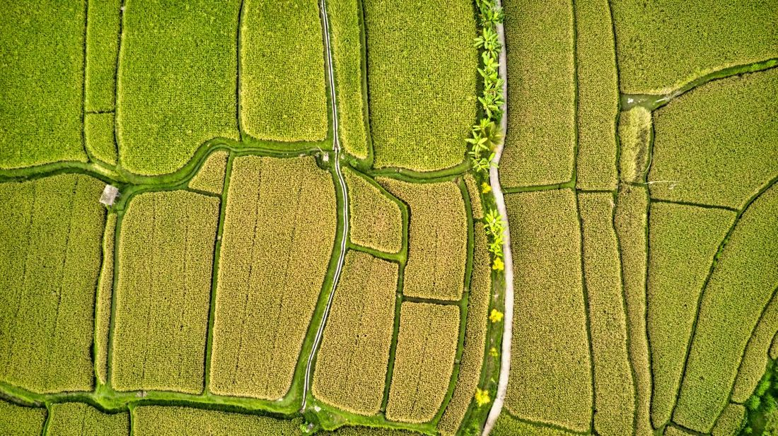 Rice field pattern. Bali Ubud, Bali INDONESIA Travel Destinations Tourism Rice Field Aerial View Drone Photography Green Color Environment Landscape No People Pattern Land Field Plant Outdoors Day Tranquility Rural Scene Beauty In Nature Agriculture Growth Nature Full Frame Backgrounds