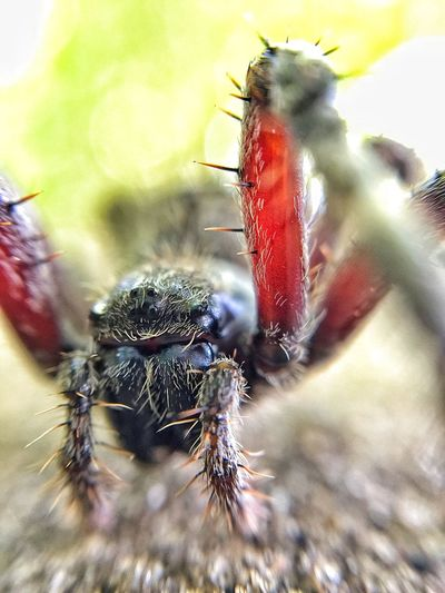 Nightmare fuel.. Check This Out Nature Eye4photography  Macro Spider EyeEm Nature Lover Nightmare Forest Outdoors