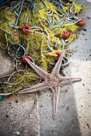 Starfish  Animal Themes Animal Animal Wildlife Animals In The Wild Sea Life Star Shape Sea Marine One Animal Nature No People High Angle View Land Shape Sand Outdoors Fishing Industry Bycatch By-catch Fishing Net
