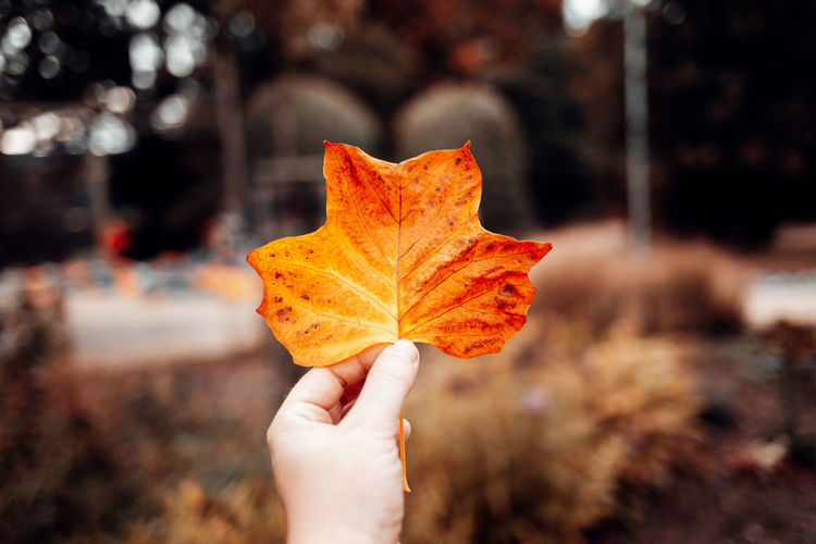 Close-up of hand holding leaf during autumn