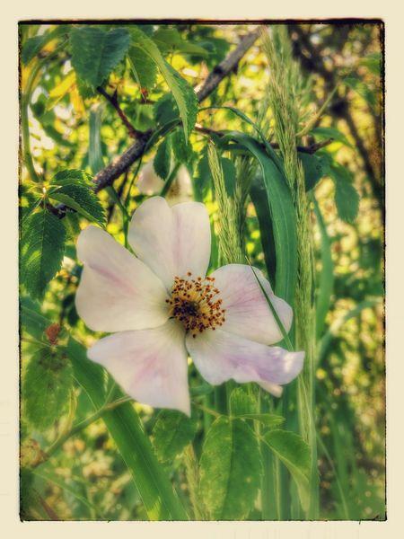 Enjoying Nature IPhoneography Happiness Enjoying Life Flowers