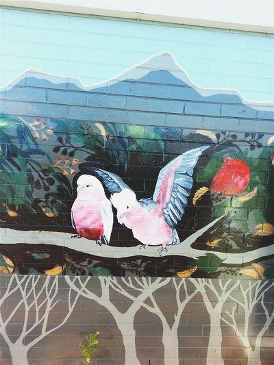 Exploring Newcastle Taking Photos Check This Out Graffiti Art NSW Australia Beautiful