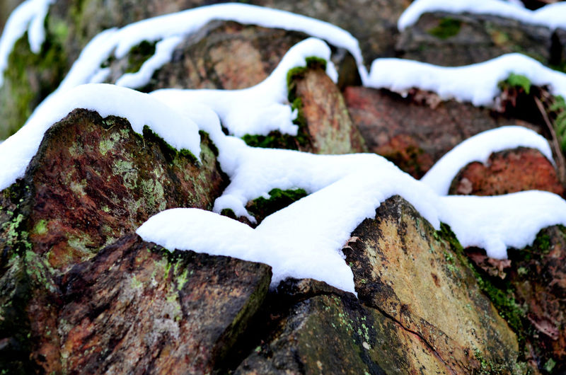 Close-up of snow on tree trunk