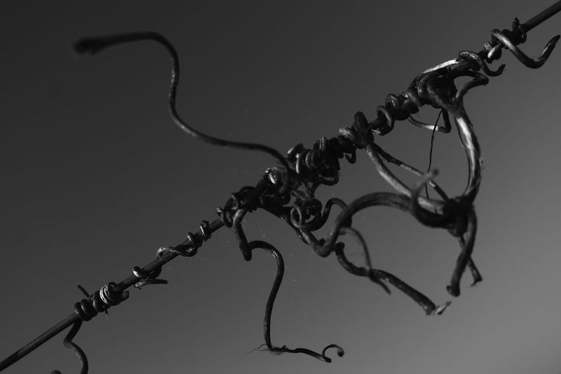 Life... Life Lifestyle Chain Close-up Contortion Day Low Angle View Metal No People Outdoors Tendril