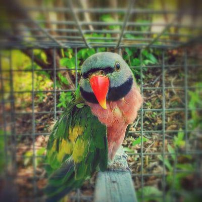 Bird Parrot Look Me In The Eyes