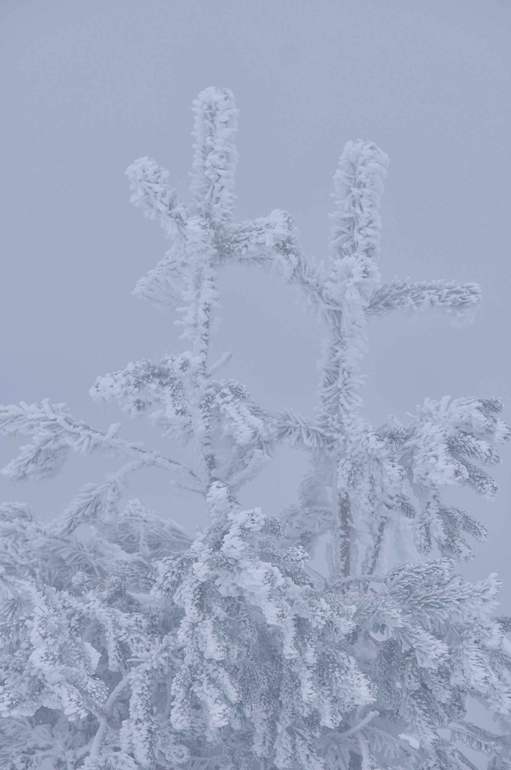 winter, snow, cold temperature, white color, weather, nature, no people, beauty in nature, outdoors, day, close-up, sky