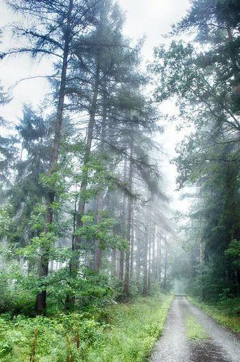 Forest Walking Around Taking Photos Nature