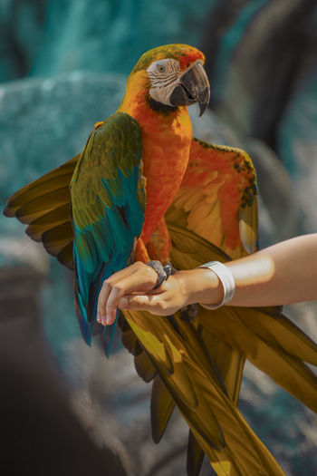 Low angle view of parrot perching on hand
