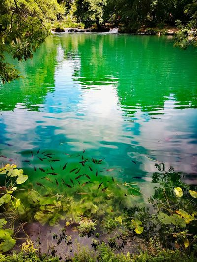 Smaragd Fishes In The Smaragd HuaweiP9 Tree Water Lake Reflection Floating On Water Refraction Forest Swamp Sky Landscape