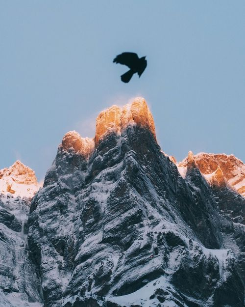 Snow Mountain Low Angle View Animals In The Wild Bird Nature Cold Temperature Rock - Object Clear Sky Mountain Range Day Physical Geography Outdoors Beauty In Nature No People Animal Themes Mountain Peak Scenics Rocky Mountains Winter Sunrise Light Rock Glow Morning The Great Outdoors - 2017 EyeEm Awards