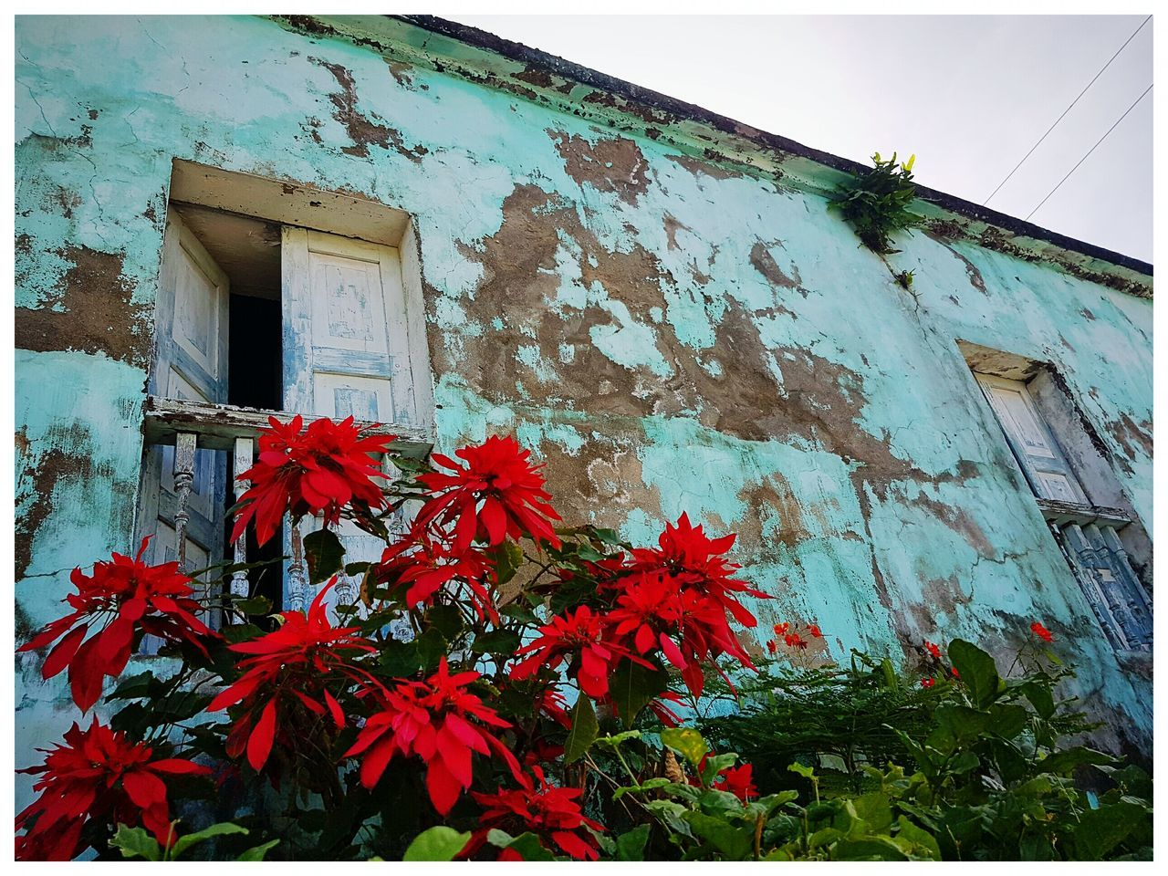architecture, building exterior, built structure, house, leaf, low angle view, window, growth, day, no people, outdoors, autumn, plant, red, fragility, nature, flower, close-up