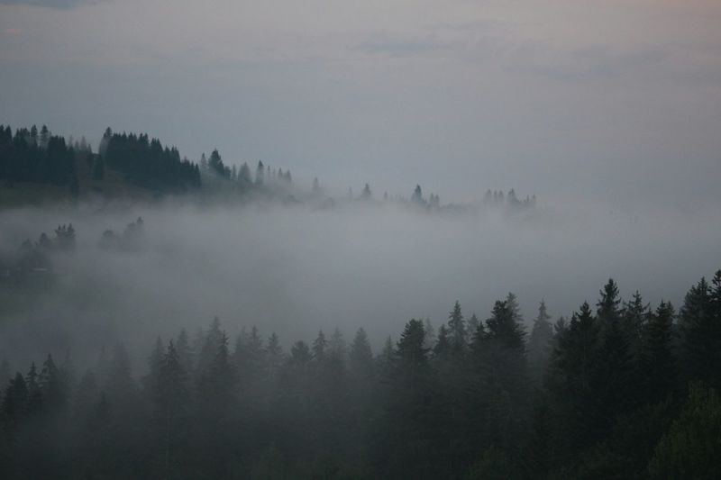 Milt Foggy Evening Nature On Your Doorstep Milt In The Forest Nature_collection Nature