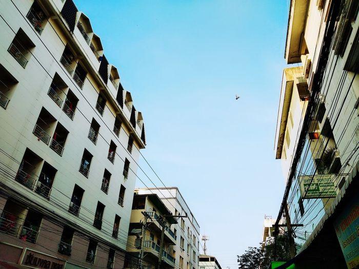 Apartment Bird