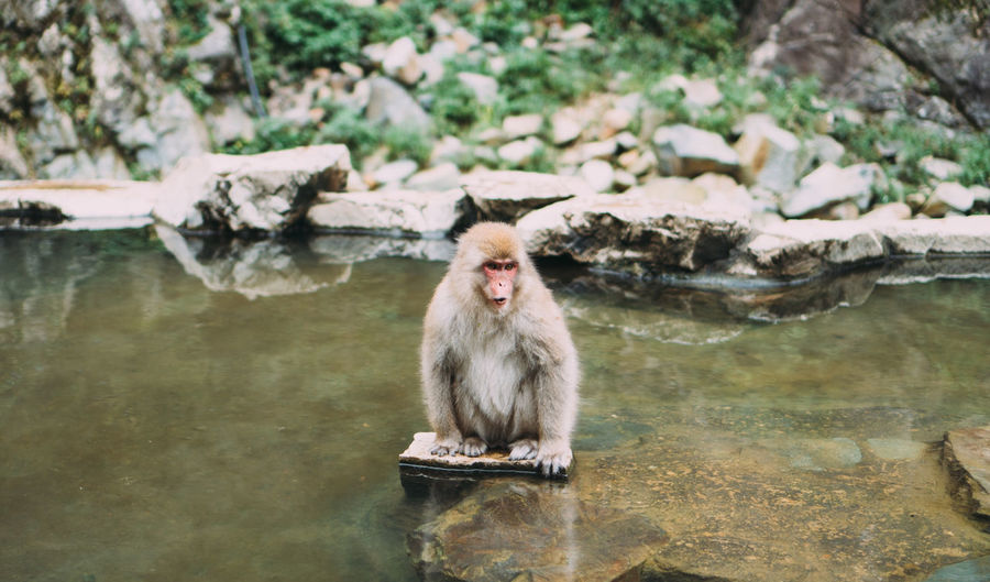 Monkey sitting on rock by water