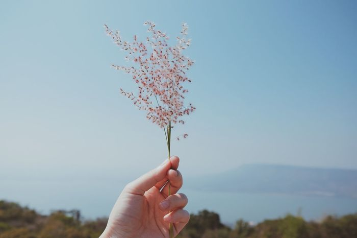 Hand holding flower with landscape view Romance Love Hand Holding Flower Hand Holding Floral Naturelovers Landscape Delicate Spring Flowers Spring Flower Human Hand Human Body Part One Person Personal Perspective Real People Human Finger Holding Sky Focus On Foreground Close-up Outdoors Clear Sky Nature