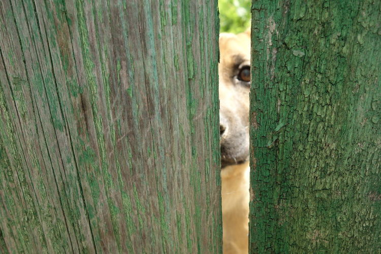 Dog Dog's Eye Fence Green Color