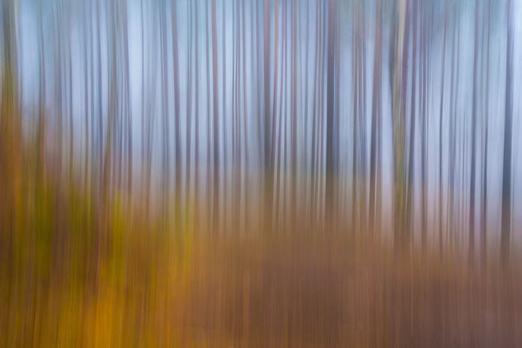 Full frame shot of abstract pattern on land
