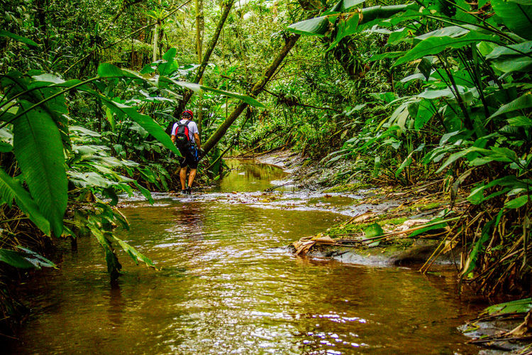 Ecoturismo Meleiro, Brazil Turismo De Aventura Adventure Backpack Beauty In Nature Day Ecoturism Exploration Extreme Sports Forest Full Length Green Color Helmet Hiking Leisure Activity Men Mid Adult Nature One Person Outdoors Real People RISK River Scenics Travel Tree Vacations Water