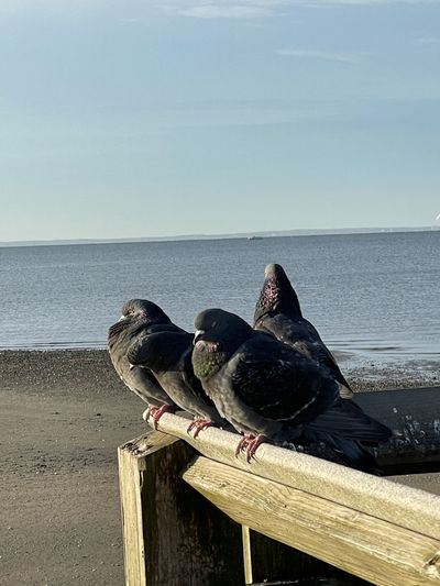 View of bird perching on wood against sea