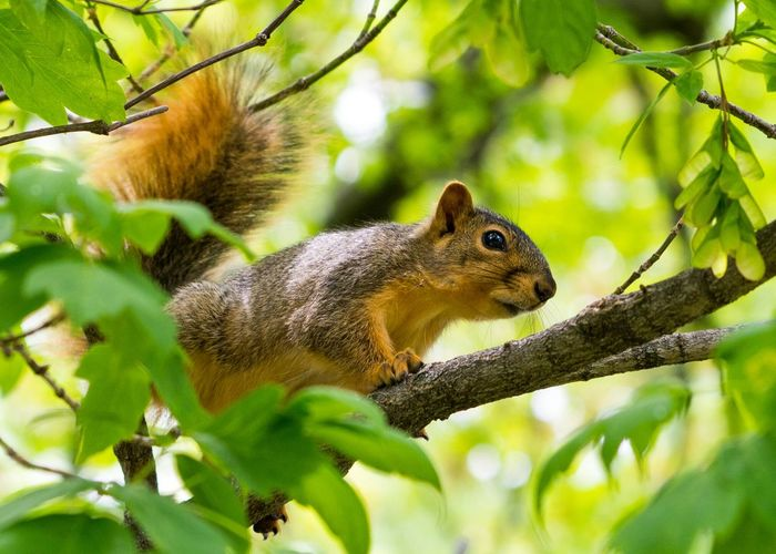 Curious Squirrel Squirrel Animals Nature Animal