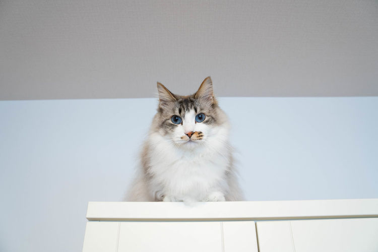 Low angle portrait of cat sitting on wall