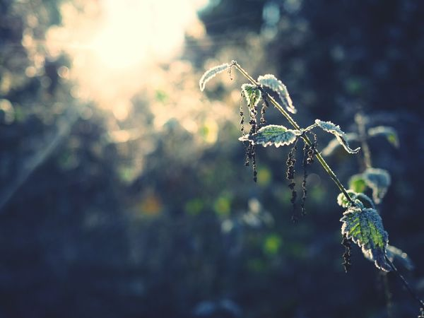 Frozen Nature Beauty In Nature No People Outdoors Spider Web Insect Intricacy Close-up Day Fragility Ice Leaf Sun Backlight Back Lit