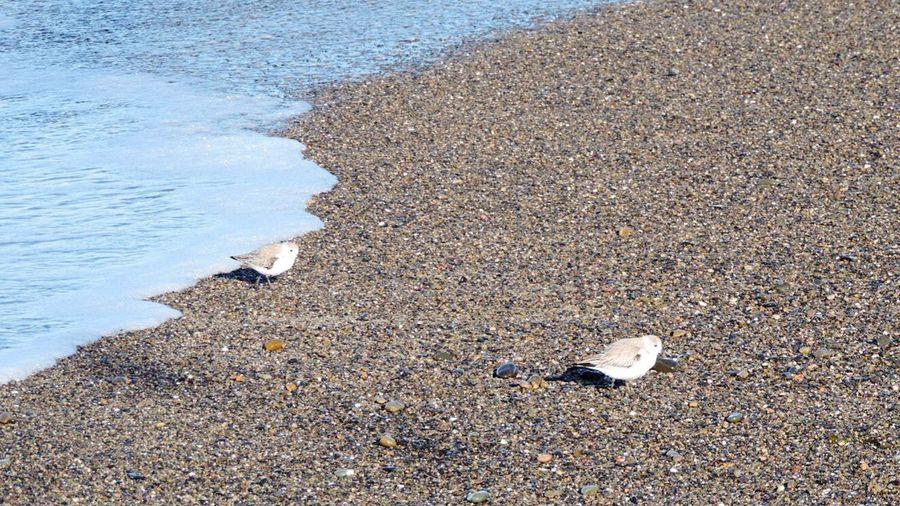 Shoreline Sand