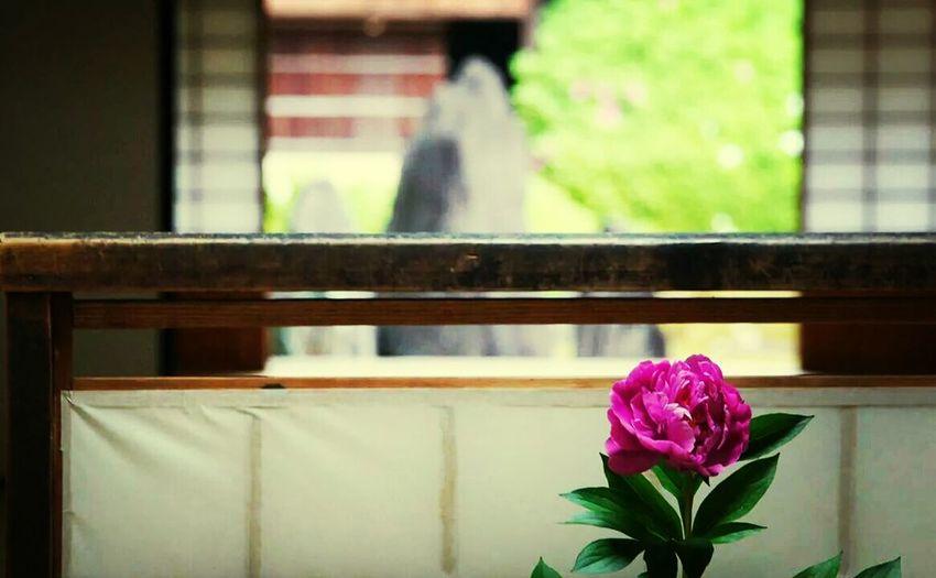 京都 Flowers Traveling Photo Around You Taking Photos 禅 First Eyeem Photo Enjoying Life Hello World Peace And Love