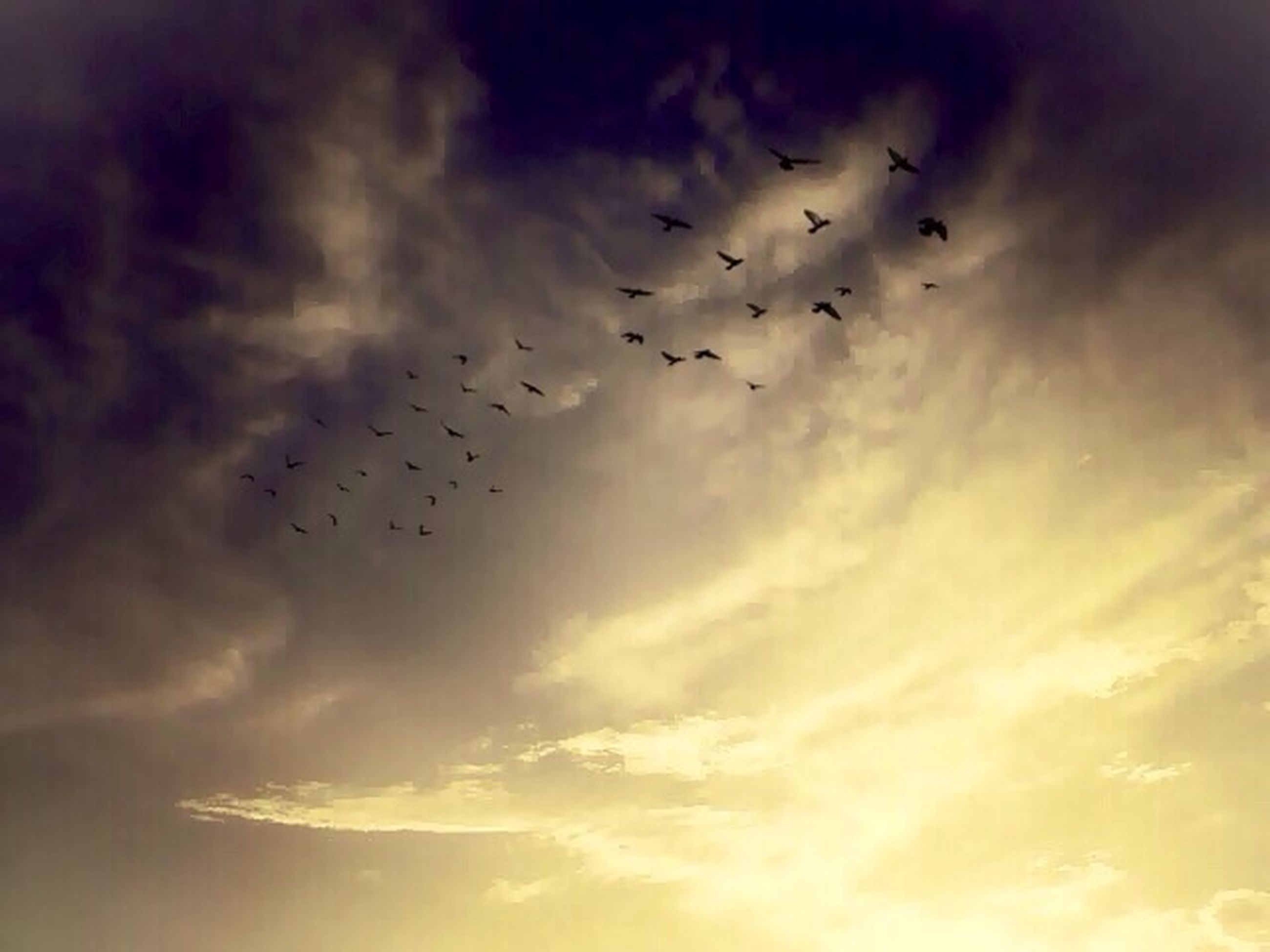flying, bird, animal themes, animals in the wild, wildlife, flock of birds, low angle view, sky, cloud - sky, silhouette, nature, mid-air, spread wings, beauty in nature, cloudy, outdoors, medium group of animals, sunset, no people