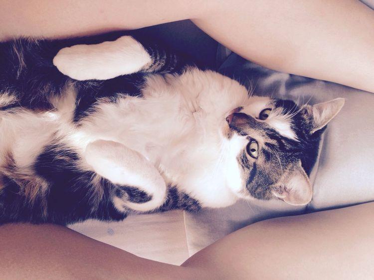 Cat Love My Cat ❤