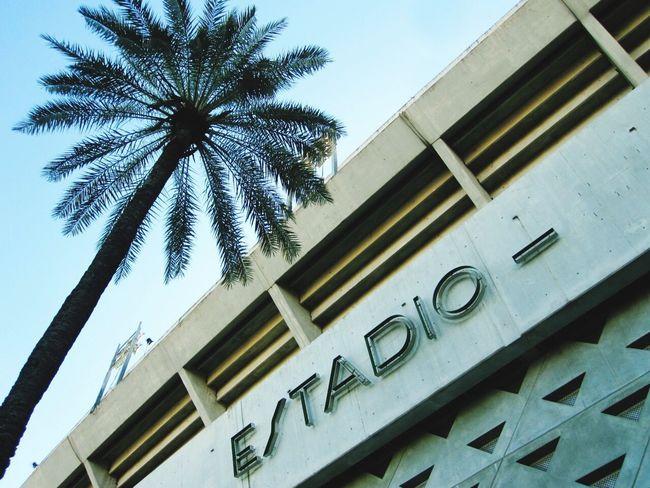 Futbol Football Seville Estadio Stadium SPAIN Palm Trees Concrete Blue Sky Football Fever