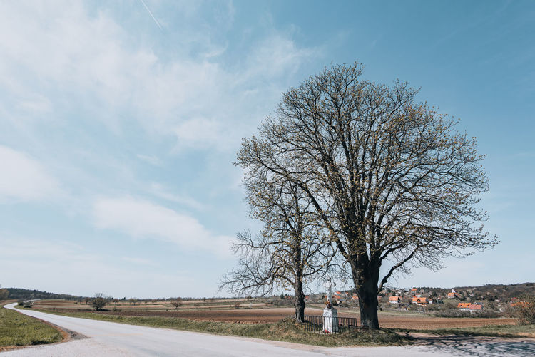 Bare tree by road against sky