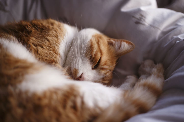 Cat sleeping on bed